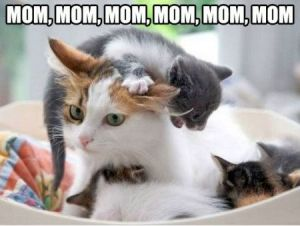 Funniest_Memes_mom-mom-mom-mom-mom-mom_19212